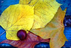 autumn Royaltyfri Bild