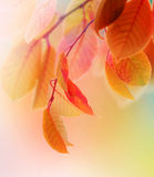 Autumn. Beautiful Autumn Leaves.Selective focus royalty free stock photo