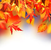Autumn. Beautiful Autumn Border with copy space royalty free stock images
