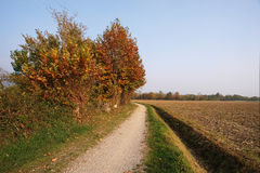 Autumn. Rodengo (Bs),Franciacorta,Lombardy,Italy,the bike track between the agricultural fields Royalty Free Stock Images