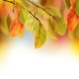 Autumn. Beautiful Autumn Leaves Border.With copy space royalty free stock photo