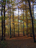 Autumn. Trees in golden colours Stock Photography