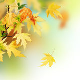 Autumn. Beautiful Autumn Border with copy space royalty free stock photo
