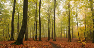 Autumn. In the woods  in denmark Royalty Free Stock Photography