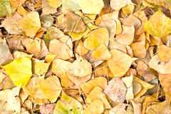 Autumn. A sprawl of fake fall colored leaves Stock Image