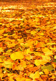 Autumn. The autumn fallen leaves laying on the ground Royalty Free Stock Image