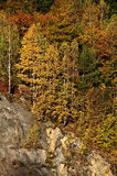 Autumn. Golden Autumn Scene in October Royalty Free Stock Photo