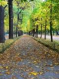 Autumn. Avenue in Peterhof Royalty Free Stock Photo