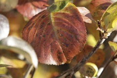 Autumn. Leaves in the autumn, waiting for winter in Norway Royalty Free Stock Photography