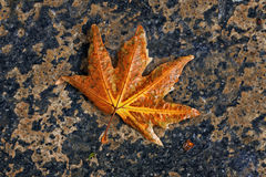 Autumn. Beautiful Autumn Leaf lying on the ground in northern areas of Pakistan Royalty Free Stock Photos