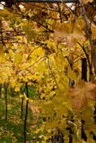Autumn. Falling leaves from trees Royalty Free Stock Images