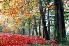 Autumn. Landscape in Czech Republic Stock Photo