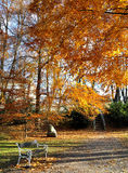 Autumn. Bench in the park in the South Bohemian stock images