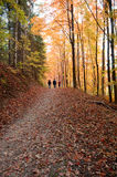 Autumn. People walking through wood with yellow-green leafs Royalty Free Stock Photography