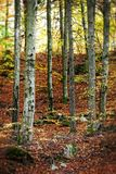 Autumn in the forest with nice colors. royalty free stock images