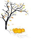 In autumn Stock Photos
