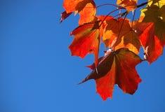 Free Autumn Stock Image - 1436461