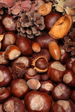 Autumn. Diffrent autumn decoration with nuts and fir cones Stock Photo