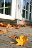Autumn. Colorful autumn maple leaves on backyard patio Royalty Free Stock Photos