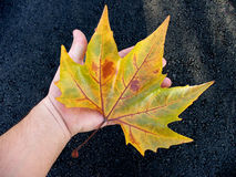 Autumn. Yellow leaf on my hand Royalty Free Stock Photo