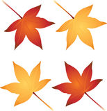 Autumn. Colorful autumn leaves perfect for accents Royalty Free Stock Photo