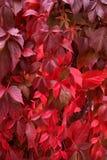 Autumn. It's a photo of autumn Stock Photos