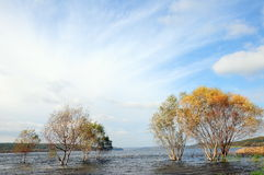 Autumn. Lake and trees during autumn Stock Photography