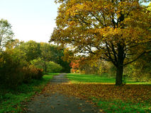 Autumn. In the park with sun Royalty Free Stock Image
