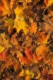 Autumn. It's a photo taken in autumn Stock Photography