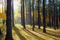 Free Autumn Stock Photo - 16215720