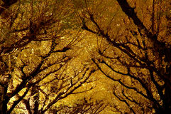 Autumn. Yellow autumn trees in Tokyo Stock Image