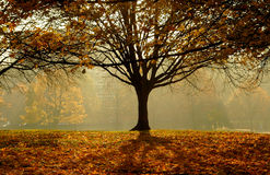 Autumn. An autumn day morning  in the  park Royalty Free Stock Image