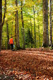Autumn. A man walks in a forest during autumn Royalty Free Stock Photos