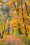 Autumn. Pathway in the autumn park Royalty Free Stock Photography