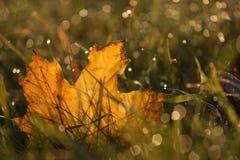 Autumn. An autumn foliage in dewy grass Stock Photos