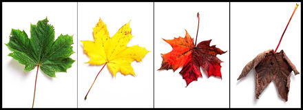 Autumn. Leaf panel multi colour royalty free stock photography