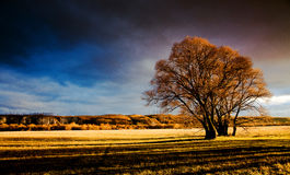 Autumn. Landscape, a solitary tree in a field Stock Photo