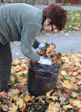 Autumn. Senior woman picking leaves in a garden Stock Photo