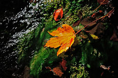 Autumn. Leaves on mossy stone Royalty Free Stock Photo