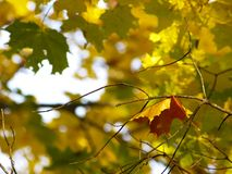 Autumn [18] Stock Photo