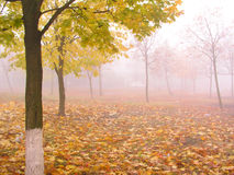 Autumn 2. Morning fog stock photography