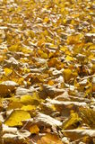 Autumn. Leaves Stock Image