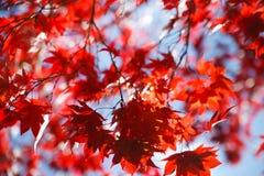 Free Autumn Royalty Free Stock Photos - 21200438
