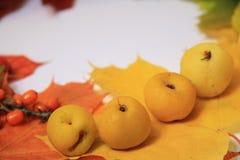 thanksgiving, autumn border Stock Photography
