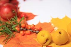 thanksgiving, autumn border Royalty Free Stock Image
