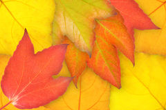 Autumn. Colorful leaves in a forest in fall Royalty Free Stock Photo
