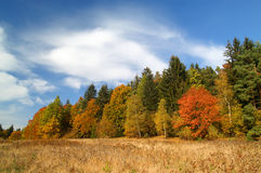 Autumn. Yellow grass, colorfull trees and blue sky with clouds Royalty Free Stock Images