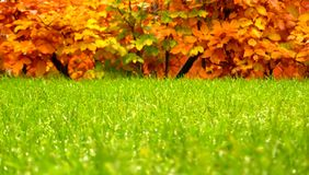 Autumn. Trees and grass in autumn Royalty Free Stock Photos
