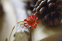 Autumn. Flower dried red lonely afternoon stock photos