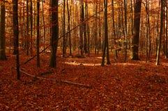 Autumn Stock Photos